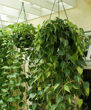 Комнатные растения не только эстетически красивы!